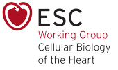 ESC Working Group on Cellular Biology of the Heart