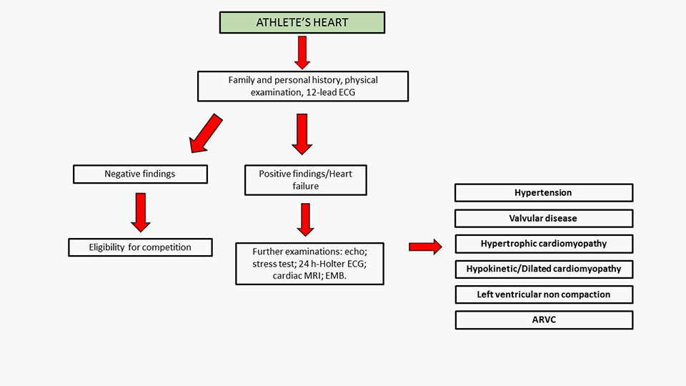 Cardiac Dysfunction And Athletes Heart New Insights Into