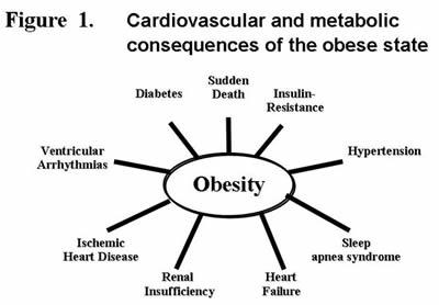 Cardiovascular and metabolic consequences of the obese state