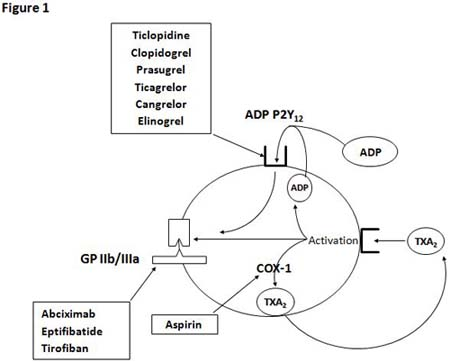 Platelet targets of the most commonly used antiplatelet drugs and novel P2Y12 receptor antagonists